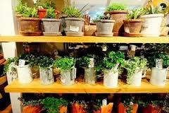 100均で売ってる植物って可愛い!欲しい!インテリアにしちゃおう♪のサムネイル画像
